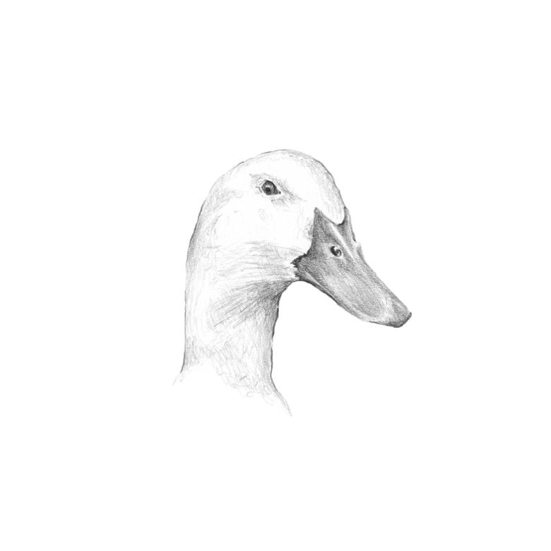Foie gras & coin canard